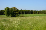 Weierwiesen2