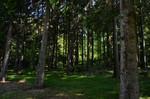 Wald bei Tauchenweiler